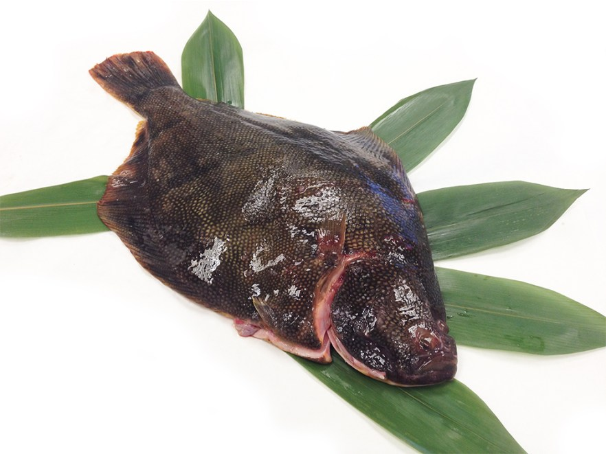 Matsukawagarei - Barfin Flounder Image