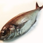 Medai - Butter Fish