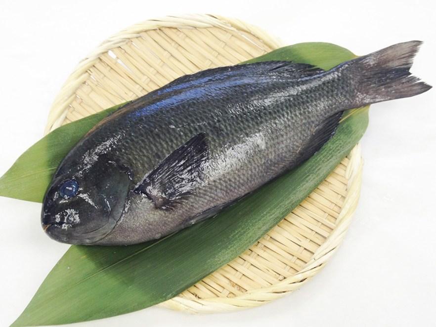 Mejina - Largescale blackfish Image
