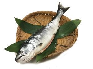Sakura Masu - Masu Salmon Image