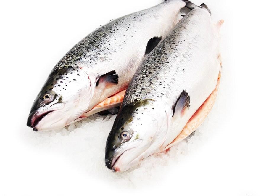Salmon - Atlantic Image