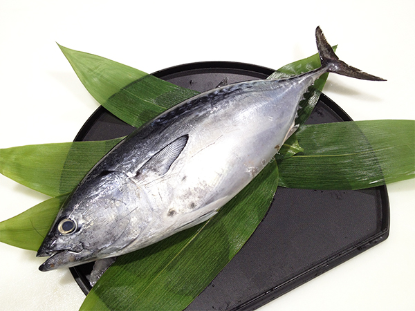 Katsuo (Suma) - Bonito Image