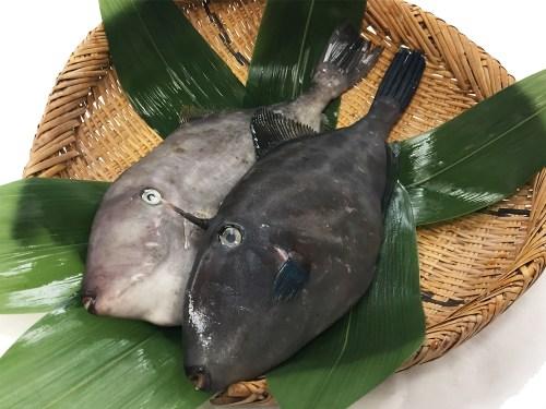 Umazurahagi - Black scraper
