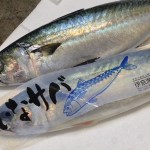 Ina Saba - Mackerel Japan