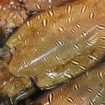Ko-Ika / Mongo Ika - Cuttlefish