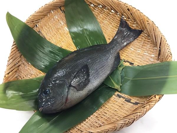 MEJINA – Largescale blackfish