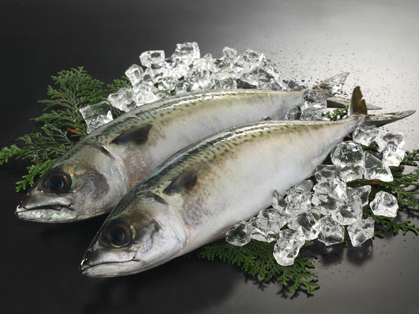 Saba - Mackerel