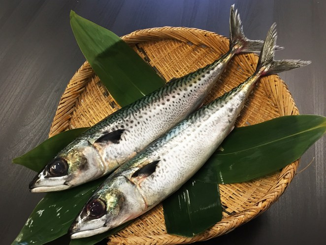 Gomasaba - Mackerel