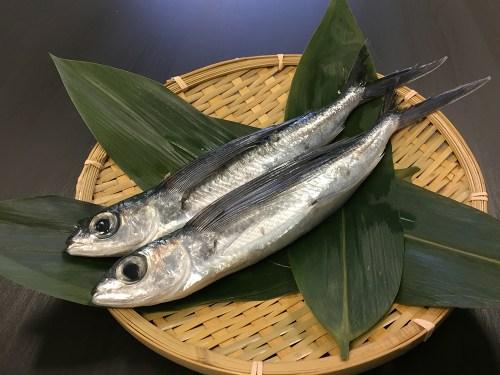 TOBIUO – Flyingfish