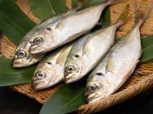 "AJI ""Izumi Ougon""Brand - wild caught horse mackerel Image"