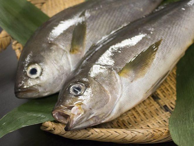 ISAKI – Japanese Grunt fish