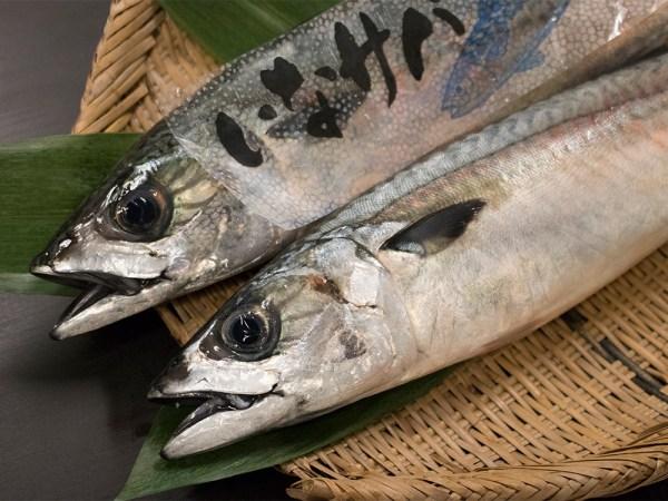 INA-Saba – INA brand mackerel