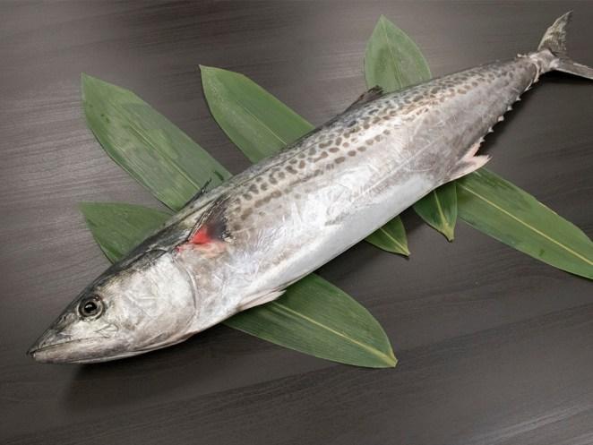Sawara - Spanish mackerel