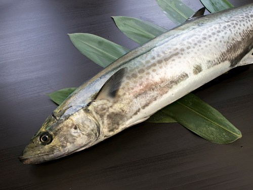 Sawara - Spanish mackerel