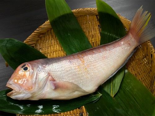 Amadai - Japanese tilefish