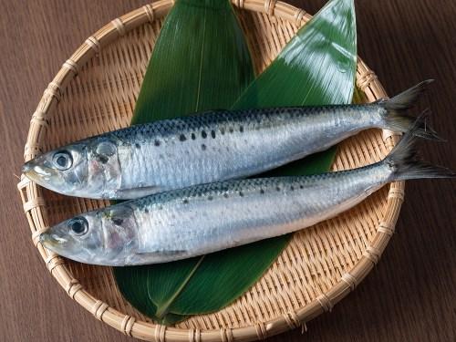 IWASHI - Japanese sardine