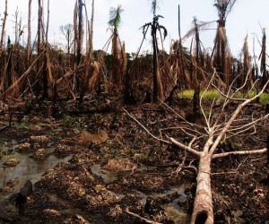 typical oil spill site in Nigeria's Niger Delta region