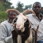 Eid-el-Kabir: APC, PDP greet Nigerian Muslims; commend spirit of sacrifice; urge rededication to God