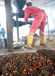 Oil palm production