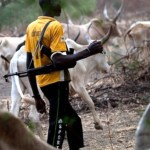 Cattle breeders group threatens to stop supply of cows to the South; Threaten Benue Gov. with law suit