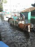 asuncion-horses
