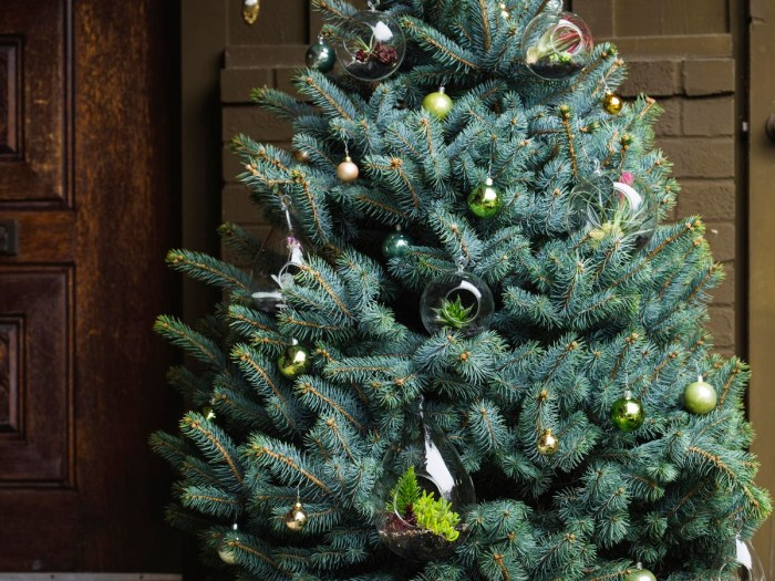 Renting a Live Christmas Tree