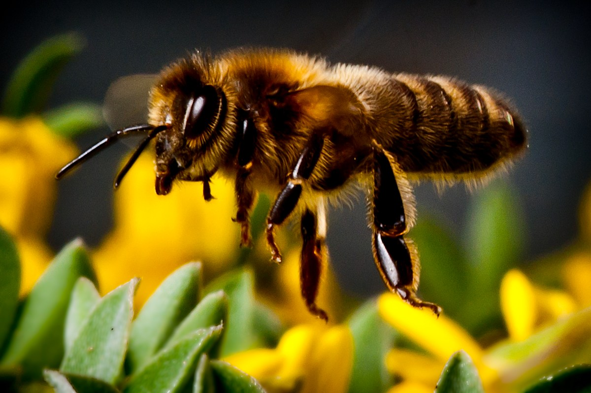 Are Bees Really Dying? Are We the Cause or the Solution?