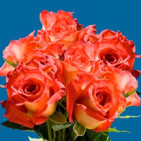 Lipstick Roses Long 75