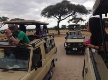 safari jeeps copy