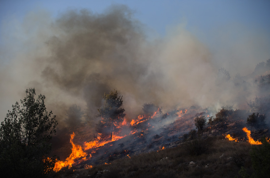 Fire fighters try to extinguish a forest fire which broke out in the forest near the Nataf nature reserve, outside of Jerusalem on November 23, 2016. Photo by Yonatan Sindel/Flash90