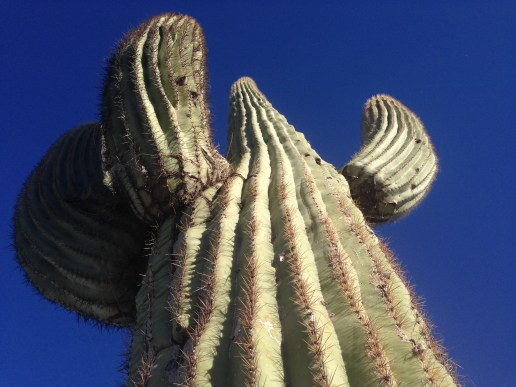 GD103410 - Scottsdale AZ SKY OF SEA CACTUS SO HIGH just loved the views here