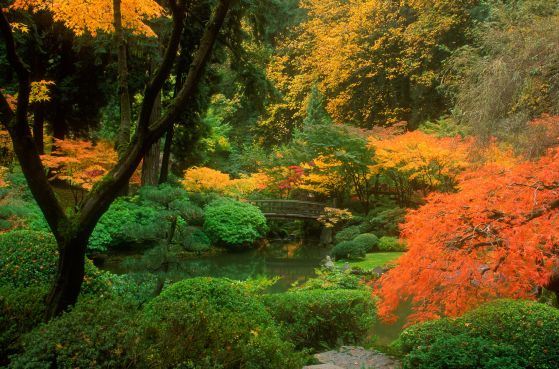 The leaves starting to change at the Japanese garden in Portland, Oregon.