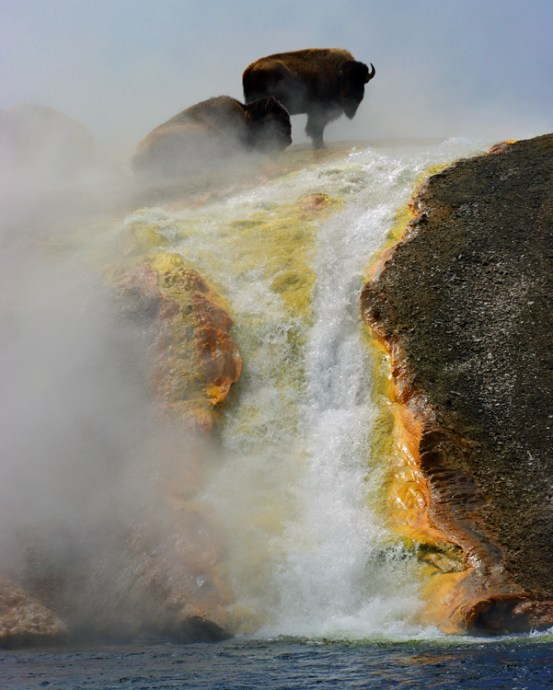 Global Member Jeff S. captured this American Bison on film (from a safe distance!) perched atop a waterfall in Wyoming at Yellowstone National Park.