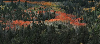 """Utah high country in the fall is spectacular!"" - Member J. V."