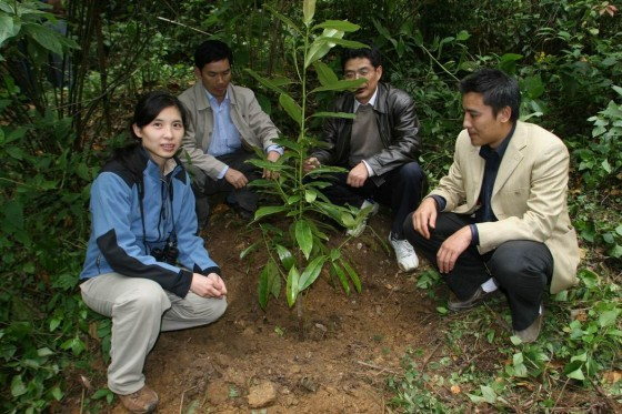 Planting Magnolia sinica seedlings in the wild (credit: Li Xiaoya/FFI).