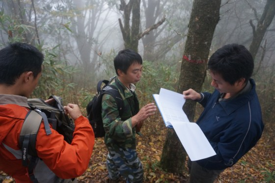 Monitoring programmes have been established for the Ziyuan fir. Credit: Lin Wuying/FFI.
