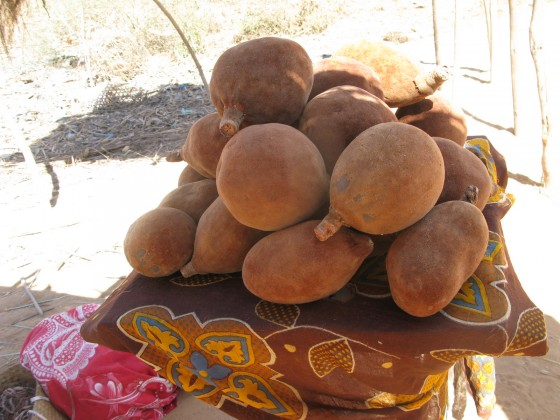 Fruits from the Renala are highly nutritious. Credit: Georgina Magin.