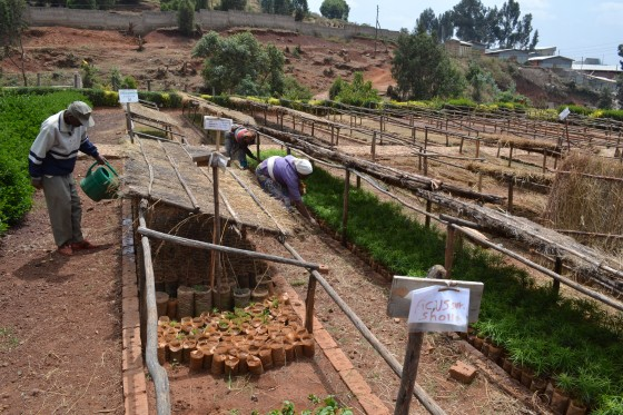 Nursery at Gullele Botanic Garden, Addis Ababa