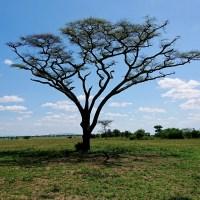 Serengeti plains at Grumeti