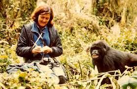 Famous naturalist, Dian Fossey, and a mountain gorilla in Rwanda