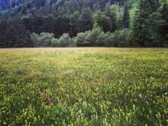 Meadowgram.