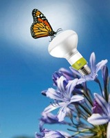 Switching Light Bulbs? Consider Going Mercury Free! – Options for Sustainable Lighting