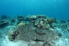 Imperiled Coral Reefs, Gone by 2050?