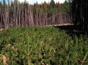 Reforestation is an essential element of reducing CO2 and helping to restore a healthy environment