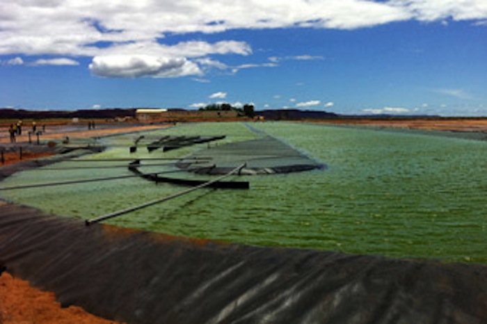California Start-Up Looks to Scale Up Algae Biofuel-Agriculture-BioPharma System