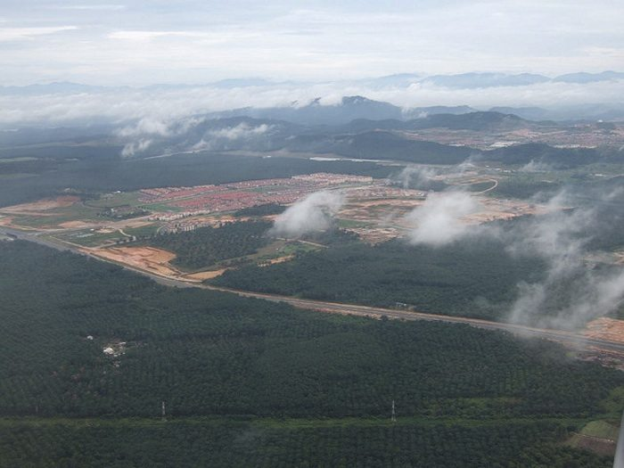 EarthTalk: Global Warming and Deforestation
