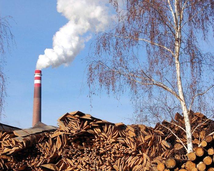 EarthTalk: Biomass Energy – Hype or Solution?