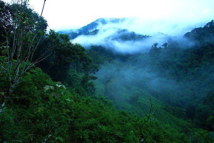 Six Tropical Forest Countries Qualify for Forest Carbon Partnership Facility REDD+ Grants