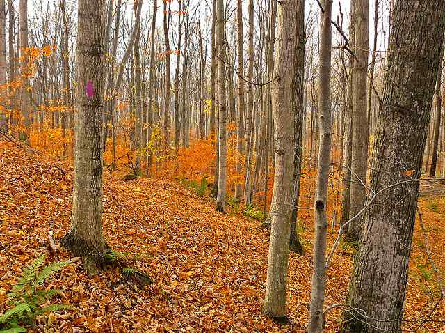 Video Friday: The Nature Conservancy – Investing in Forests and Fish in Michigan's Northern Forests