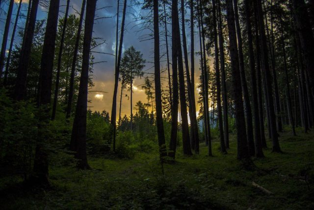 Forest offers many benefits, including a carbon sink